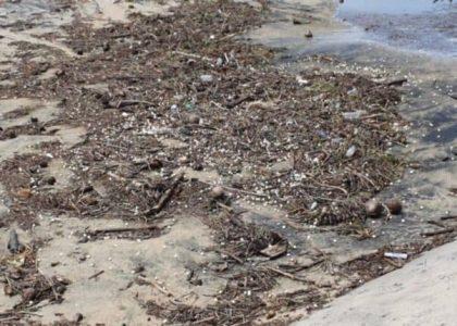 """""""Narda"""" destruyó 4 millones de huevos de tortuga en Oaxaca"""