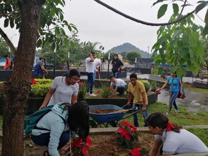 plantan nochebuenas chiltepec (1)