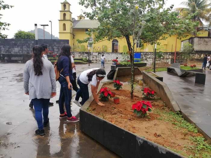 Plantan nochebuenas en parque de Chiltepec