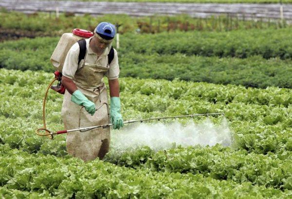 Especialistas señalan que cultivos peligran por agrotóxicos en Oaxaca