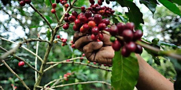 Con fusión de café Chinanteco y Mazateco, universitaria busca incentivar economía en Jalapa de Díaz