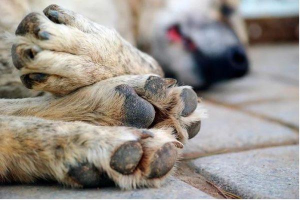 Envenenamiento de mascotas, la denuncia más común en redes sociales: Naricitas húmedas