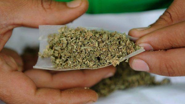 Comisiones del Senado aprueban uso lúdico de la marihuana