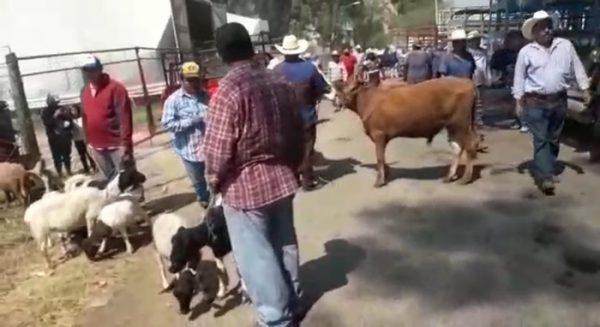 Ganaderos de Etla, piden se les permita instalarse en el baratillo para vender su ganado