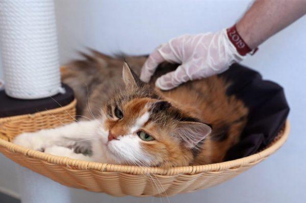 Nueva York: Dos gatos dan positivo a covid-19