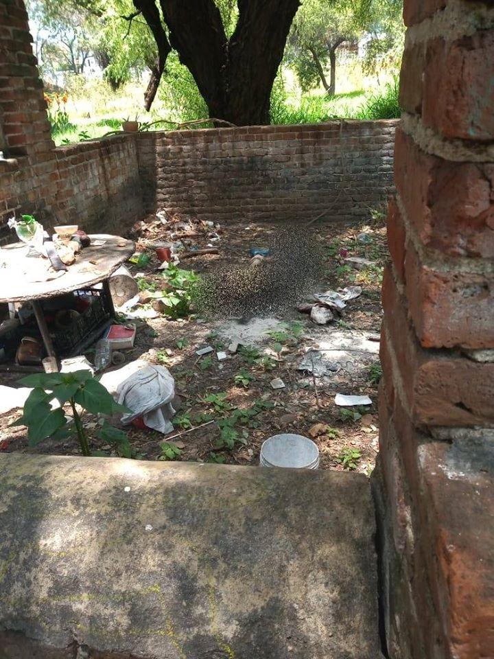 Encuentran osamenta en predio abandonado de Oaxaca