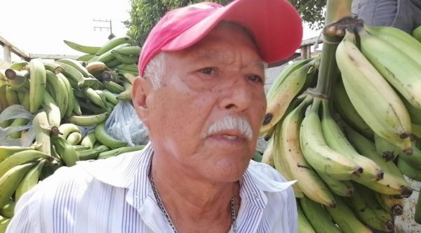 En Valle, productores de plátano malbaratan sus productos por falta de mercado y sequía
