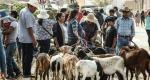 """Por única ocasión permiten a ganaderos abrir """"El baratillo"""" en Cuilápam"""