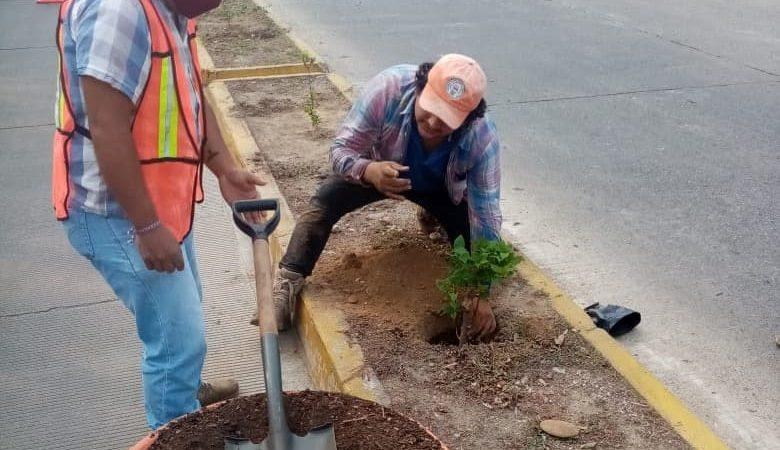 Continúa embellecimiento de los bulevares de Tuxtepec