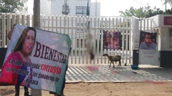 Ganaderos de Oaxaca señalan de corrupta a Delegada Bienestar Nancy Ortiz