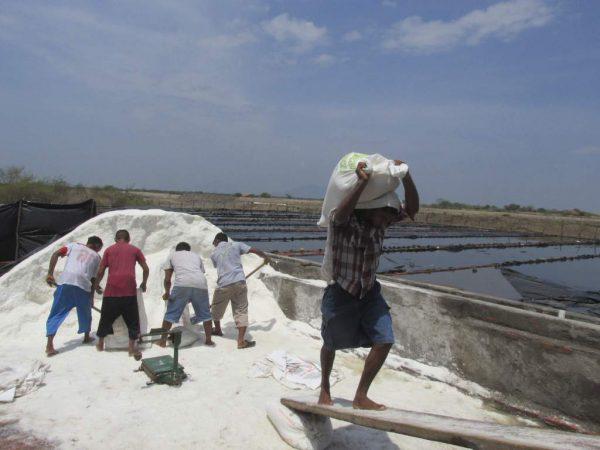 Productores de sal en Salinas del Marqués, resienten pérdidas en sus cosechas