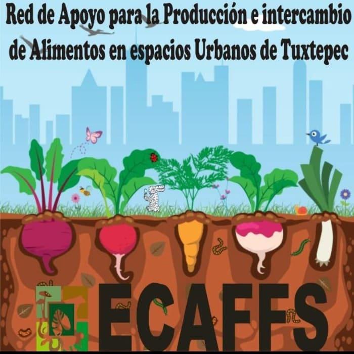 Crean Red para que Tuxtepecanos cultiven sus alimentos