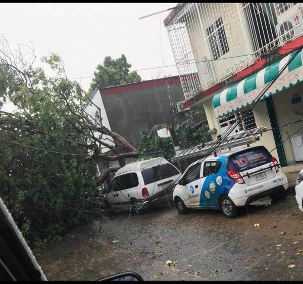 Al menos 15 árboles caídos, 4 daños en viviendas y láminas voladas, saldo de lluvia y vientos en Tuxtepec