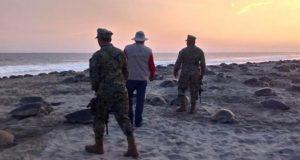 Recuperan casi 30 mil huevos de tortuga, de tráfico ilegal en costas oaxaqueñas