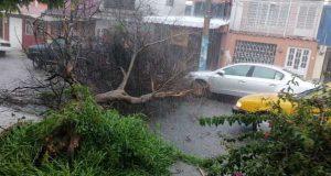 Tormenta en Oaxaca deja daños y caída de arboles