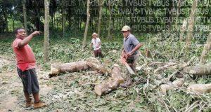 Campesinos de Valle Nacional, sufren grandes pérdidas en sus cultivos tras intensa tormenta