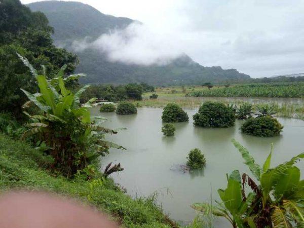 Afecta mal tiempo, cultivos en la parte baja de Valle Nacional: Protección Civil