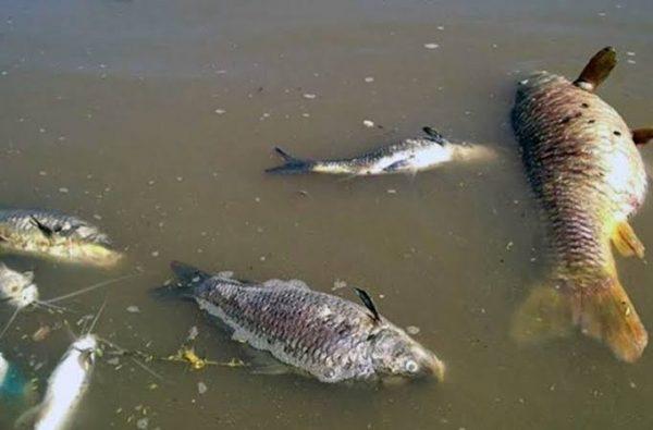 Olvidado el ecocidio del Río Tonto, a pesar de pronunciamientos para dar con los responsables