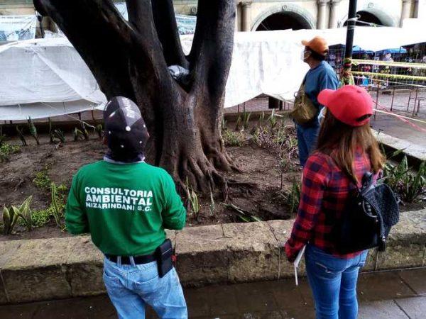 Gobierno del Estado y Municipio de Oaxaca de Juárez fortalecen acciones de atención al arbolado urbano del Zócalo