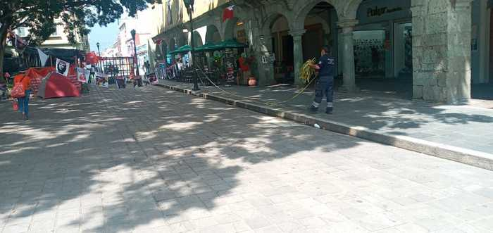 Tras caída de dos árboles, reabren zócalo de la ciudad de Oaxaca