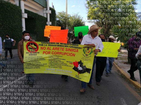 Ganaderos de Oaxaca denuncian corrupción en uso del arete SINIIGA