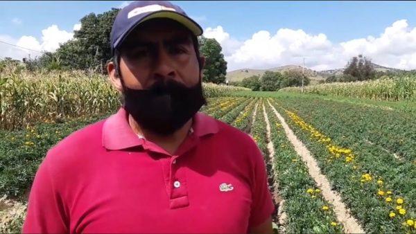 Productores de flor de Cempasúchil y Borla, cuentan situación actual de venta en Etla