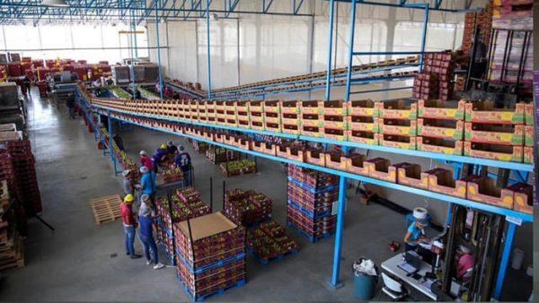 Se consolida Oaxaca en la exportación de productos agroalimentarios: SEDAPA