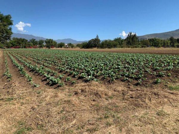 """Salvaguarda Sedapa salud de población; suspende actividades relativas a la """"Noche de Rábanos"""""""