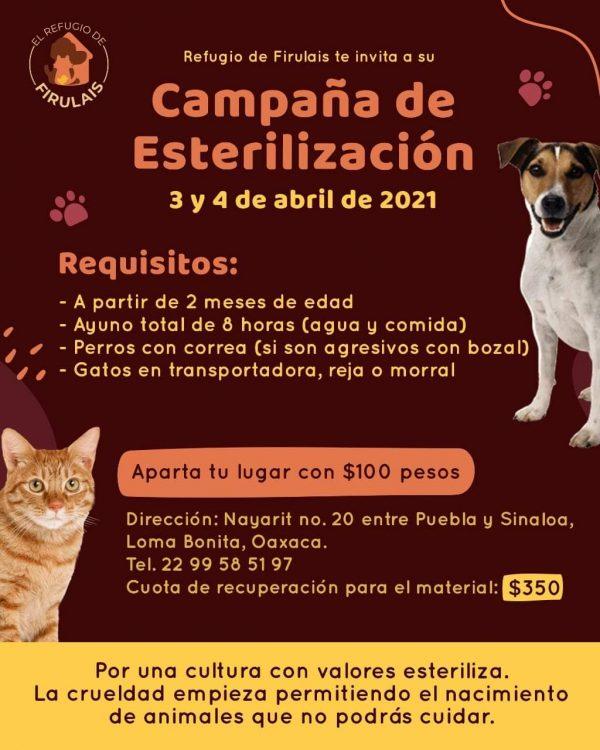 Crecen carencias en albergue canino de Loma Bonita por pandemia
