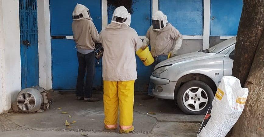 Ayuntamiento coordina esfuerzos para auxiliar en reportes de abejas