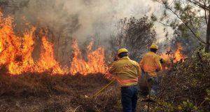 Implementa Coesfo acciones de atención inmediata a incendios forestales