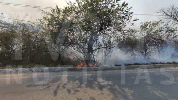 En aumento los incendios forestales en Tuxtepec, reportan más de 40