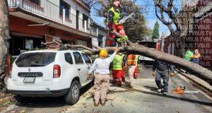 Tras primera lluvia cae árbol en Oaxaca, provoca daños a automóvil