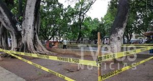 Acordonan 4 árboles del zócalo capitalino, afirman que existe riesgo de caer