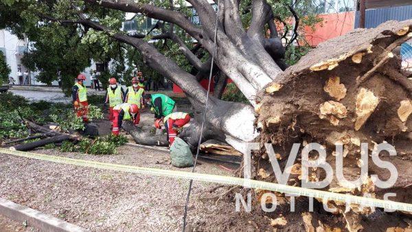 Continúan cayendo árboles en la ciudad de Oaxaca por lluvias
