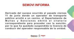 SEMOVI quita licencia a chofer que atropelló a perro en Oaxaca