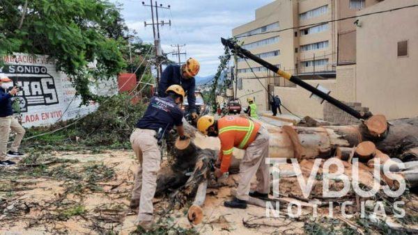 """Se cae otro árbol en la ciudad de Oaxaca, ahora en la colonia """"Estrella"""""""