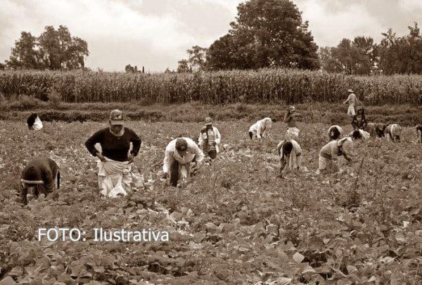 A pesar de pandemia, jornaleros cuenqueños, siguen trabajando en campos estadounidenses