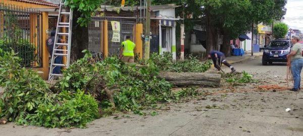 Con base a estudios debe ejecutarse la reforestación del casco urbano de Tuxtepec: ECAFFS