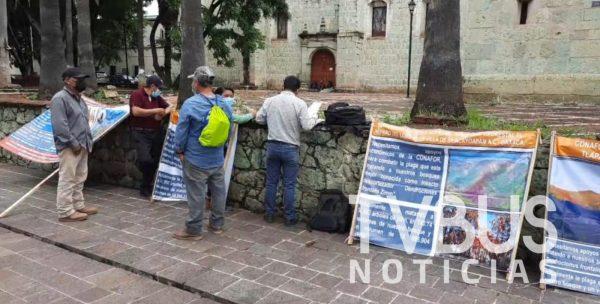 CONAFOR actúa con dolo al no aprobar recursos para atacar plaga en bosques de la mixteca