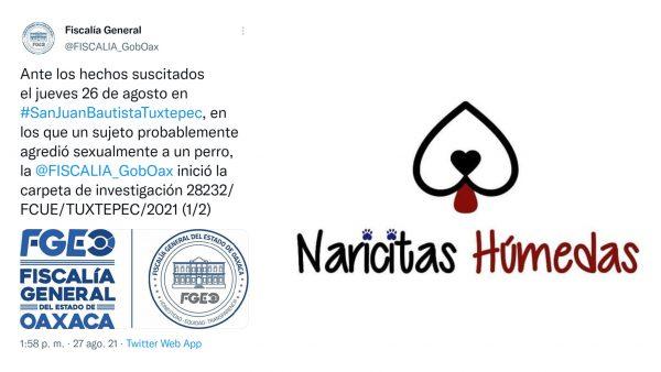 Naricitas Húmedas vigilará que Fiscalía investigue agresión a perro en Tuxtepec