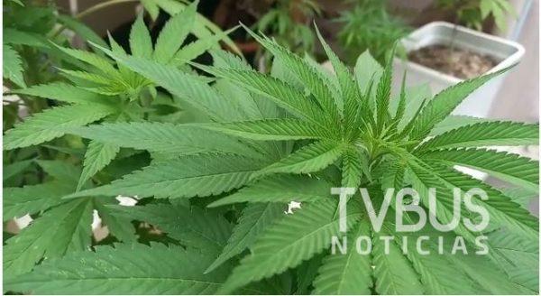 Exige Movimiento #Plantón 4-20 despenalización en el consumo de la marihuana