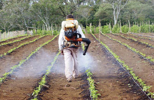 Poder Legislativo prohíbe el uso del glifosato y otros agroquímicos en Oaxaca
