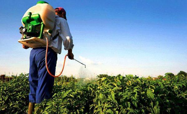 Llaman a productores de Tuxtepec, a evitar contaminar con plaguicidas
